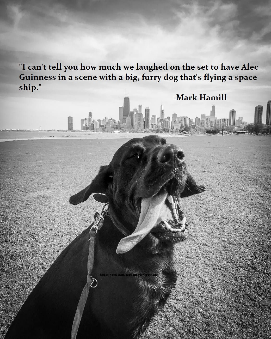 Funny Dog Quotes By Mark Hamill Beautiful Dogs Dogs Beautiful Dogs Photos