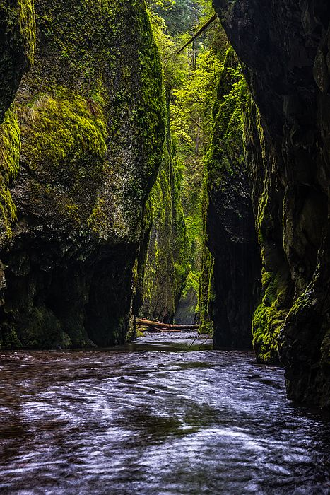 ONEONTA GORGE by Chuck Jason