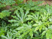 10 tropische Pflanzen, die Sie in Großbritannien anbauen können Es ist möglich, einen tropischen Stil zu erhalten …   – uncategorized