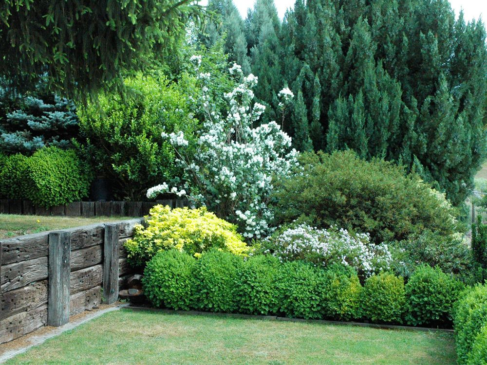 Evergreen privacy hedge screen plants evergreen in the 2 for Landscaping ideas for privacy screening