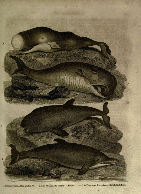 n690_w1150 by BioDivLibrary, via Flickr