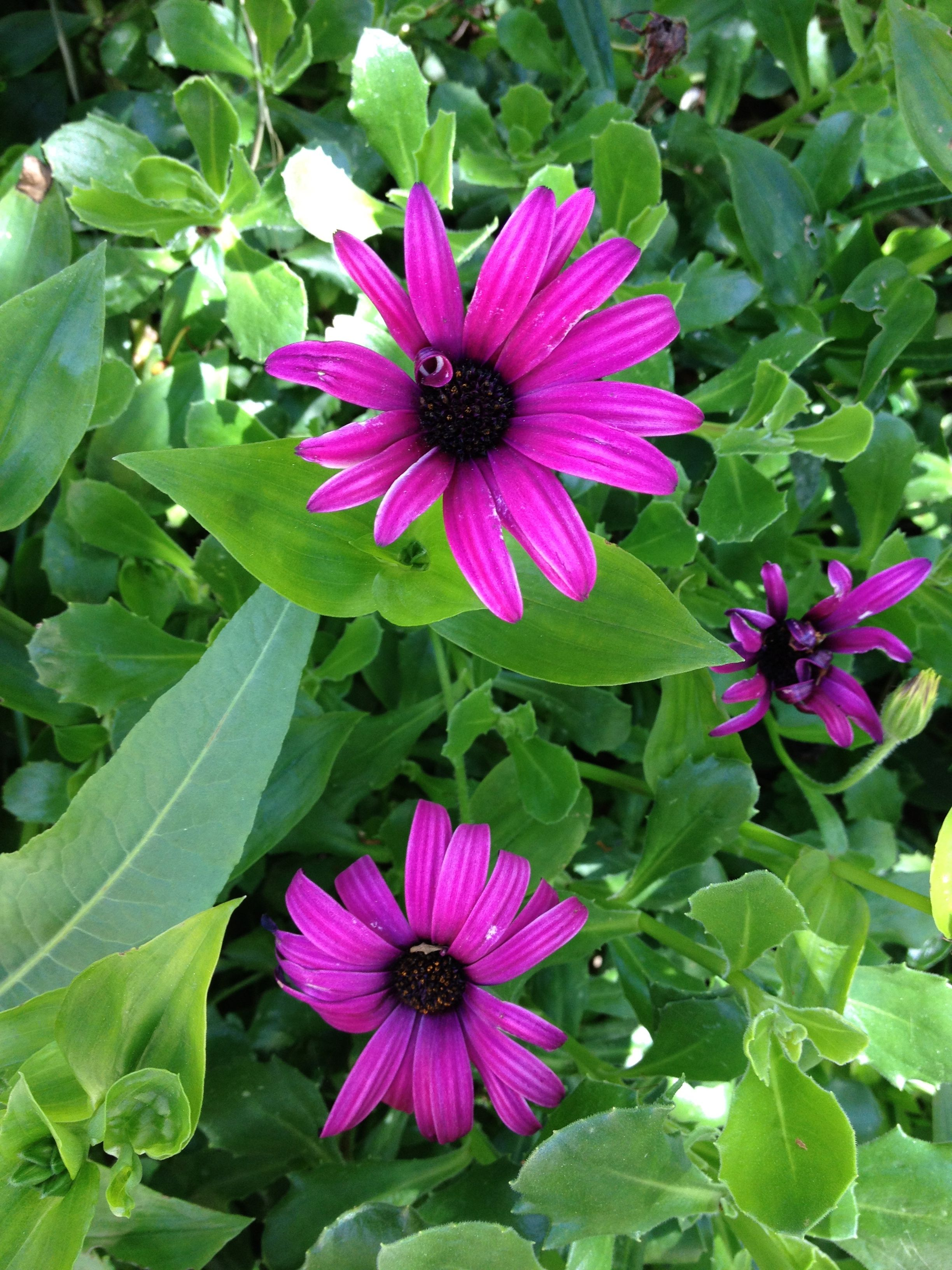 Nice Flowers From My Garden No Instash T Just Photo
