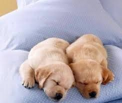 Image result for cute puppies sleeping