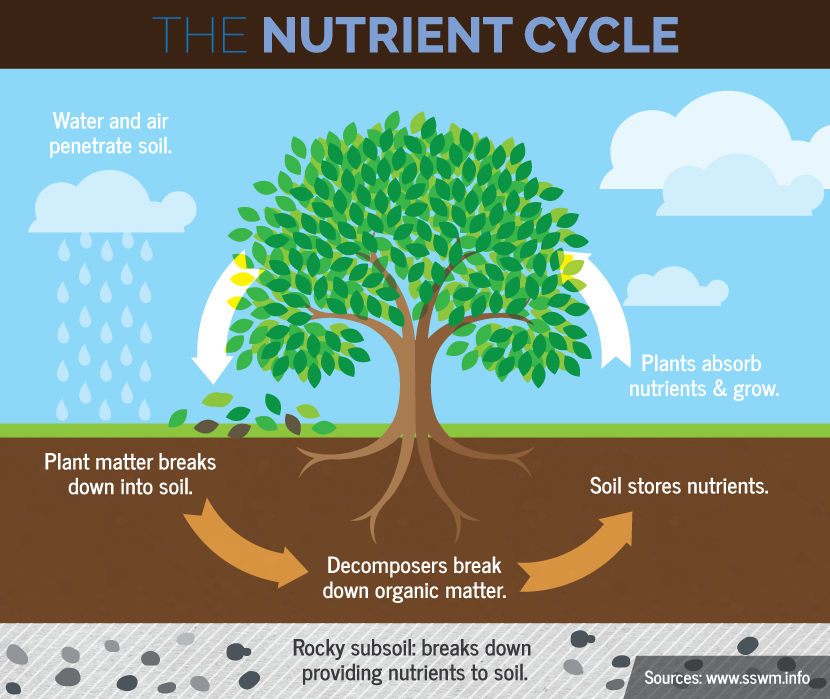 Saving your soils with crop rotation crop rotation and for Soil life cycle