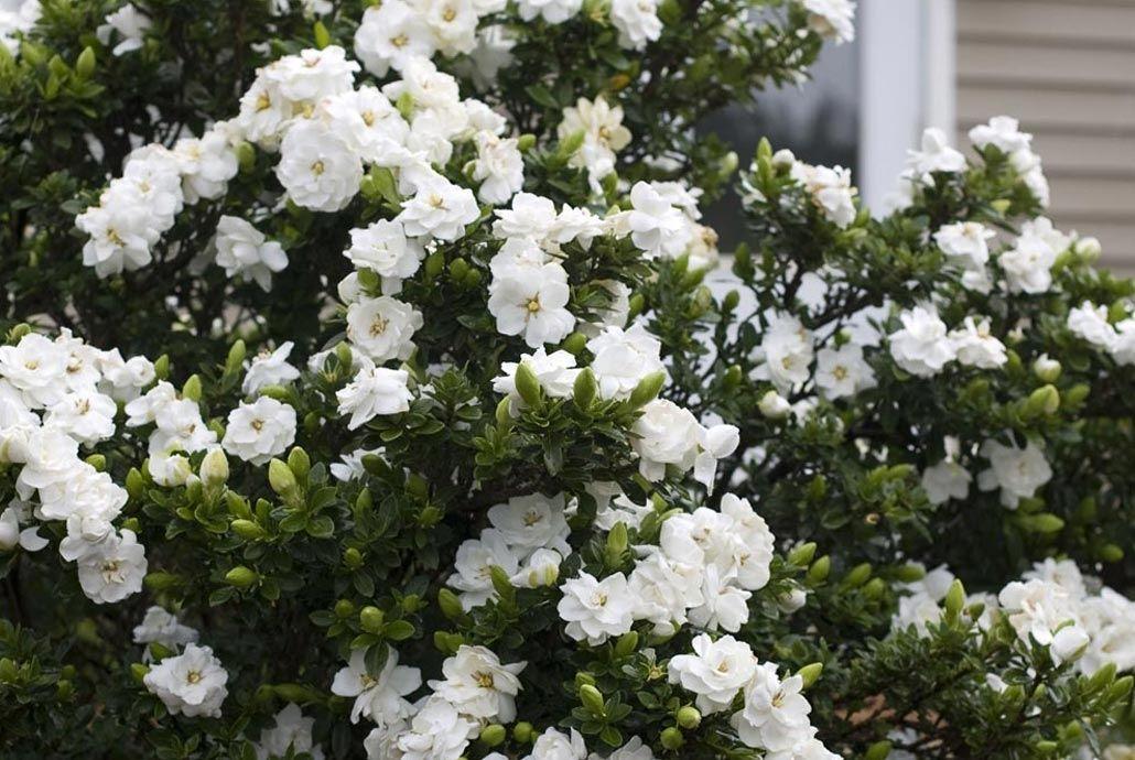 Un jardin blanc vous séduit ? Jardins blancs, Jardins et