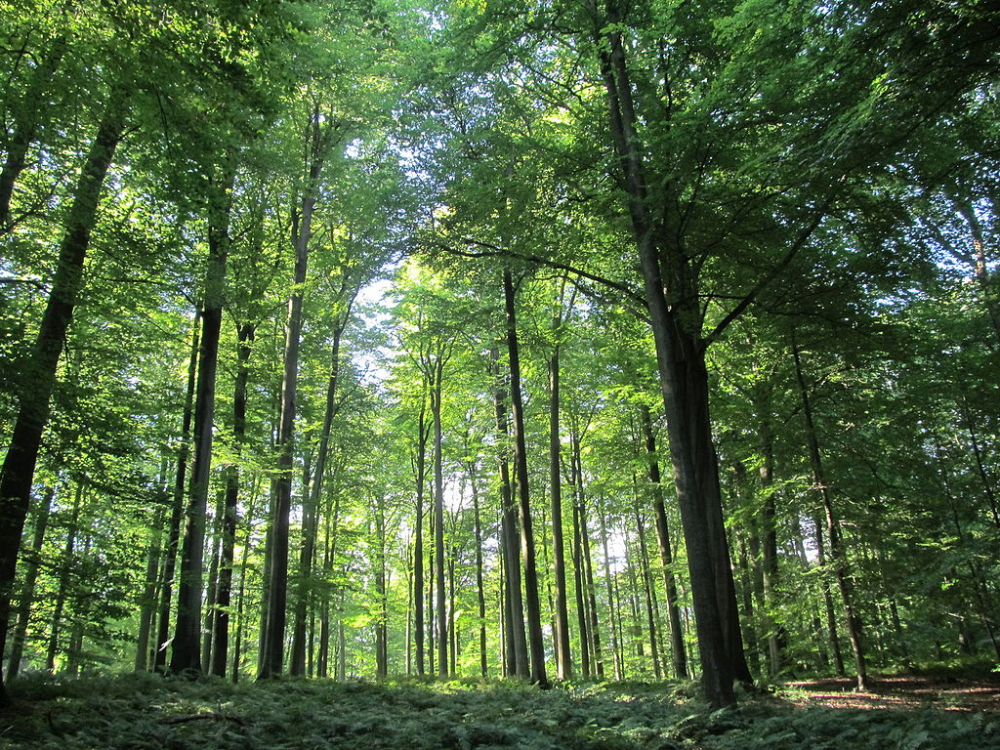 Plan To Link Up Green Areas Around Sonien Forest To Improve Biodiversity In 2020 Beautiful Places To Visit Most Beautiful Places Beautiful Places