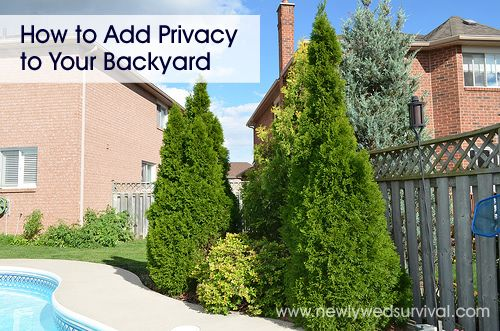 screening trees  how to get privacy in your backyard