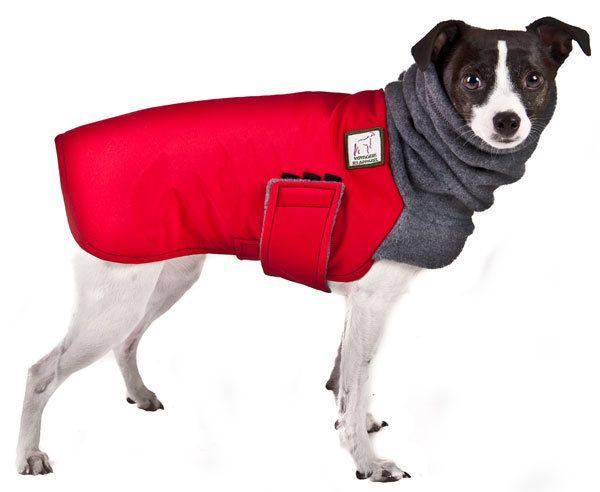 Rat Terrier Winter Coat Waterproof Dog