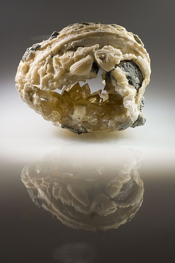 Calcite.  Drusus honey-yellow calcite crystals inside the shell bivalves.  The size of 9 cm  Florida, USA