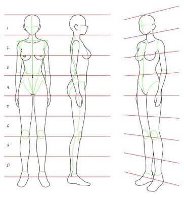 Medidas Y Forma Cuerpo Humano Mujer Proporciones Del Cuerpo Humano Cuerpo Humano Dibujo
