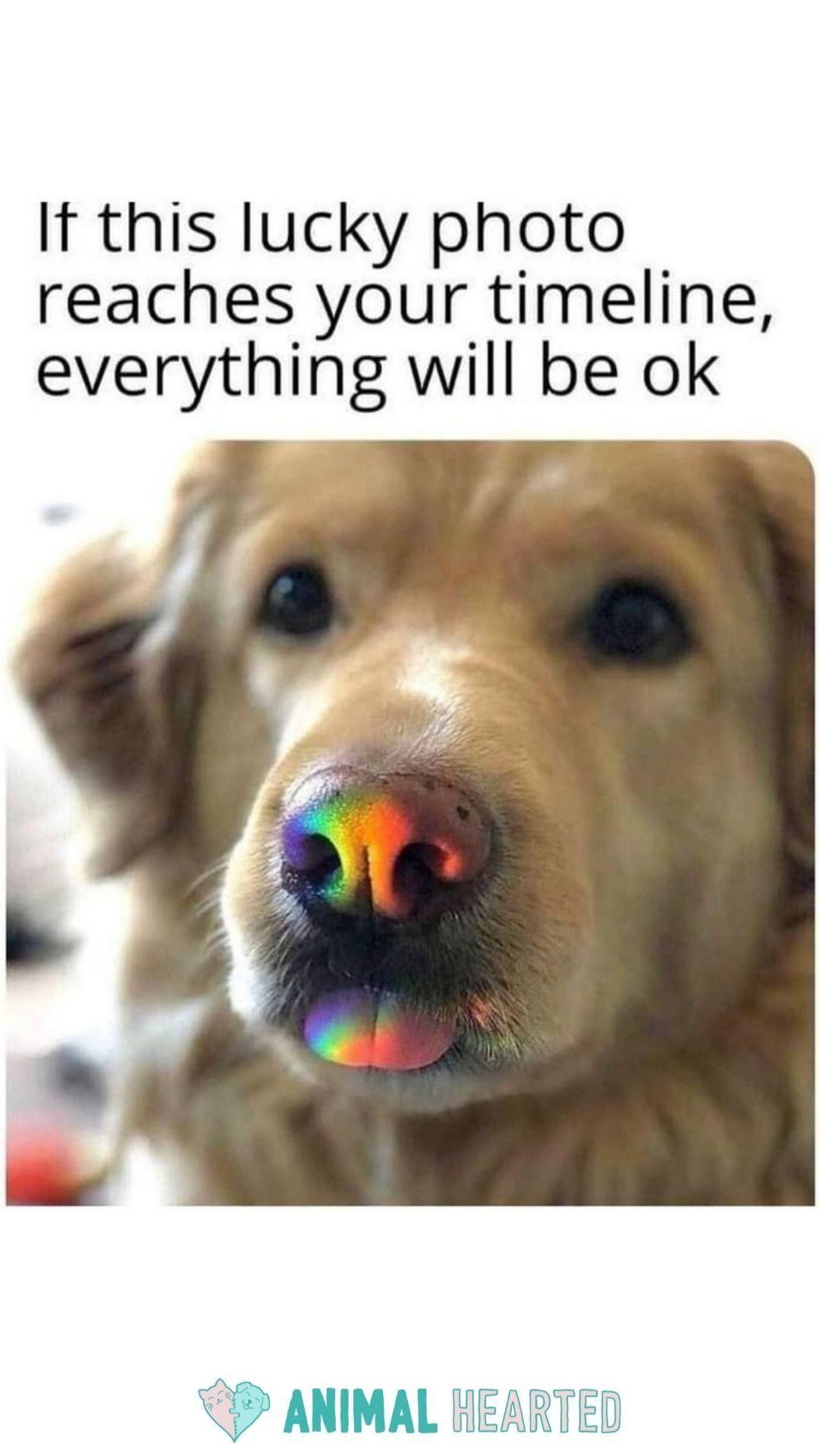 Cute Animal Memes   Animal Hearted Apparel