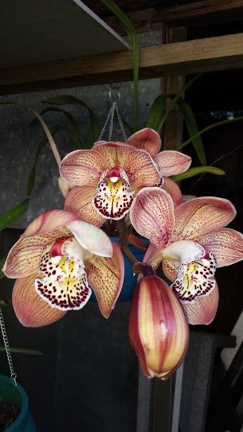 Orchidee (fiori e piante) - Comunità - Google+