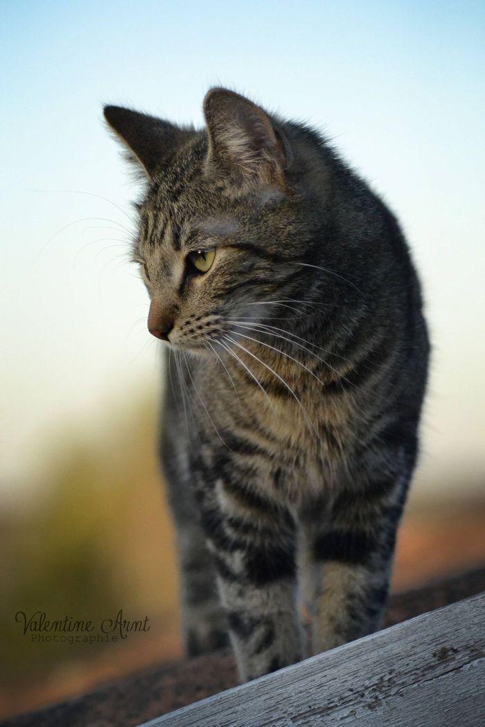 Yuuki on www.yummypets.com Cat, kitten, kitty, meow, purr, pussycat, whiskers, animals, pets, Yummypets