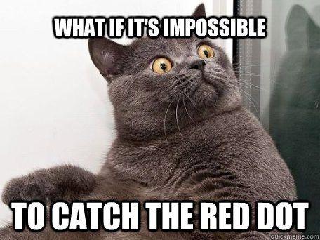 cat meme google search