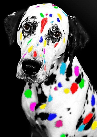 Colorful Dalmatian Canvas Print Canvas Art By Vincent