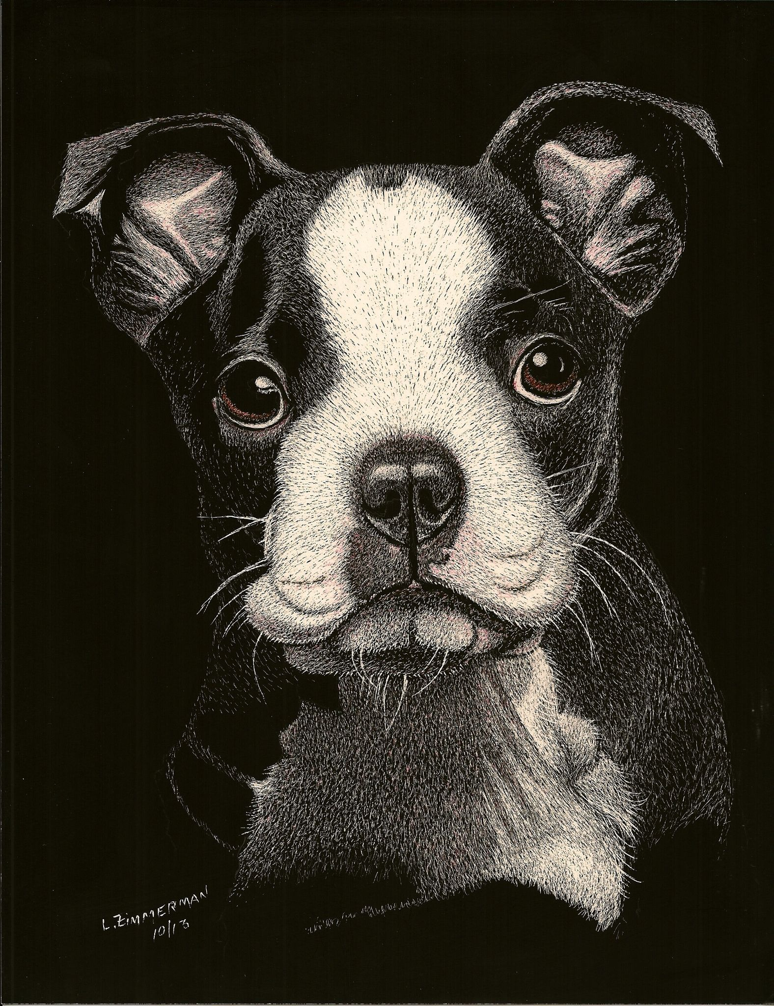 How To Find A Boston Terrier Puppy For Sale Dog Gonnit American