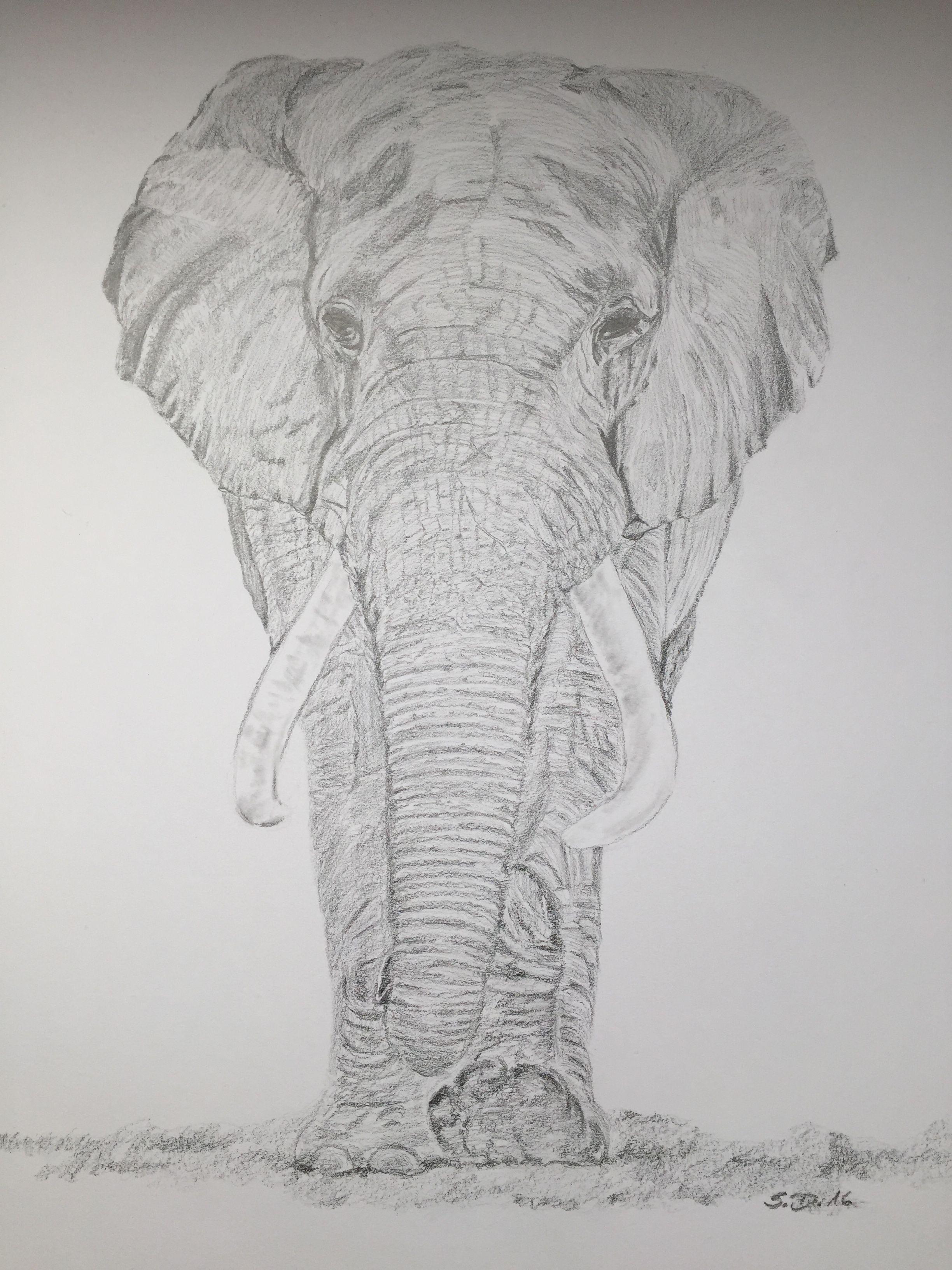 Elefant Bleistift Zeichnung zeichnen
