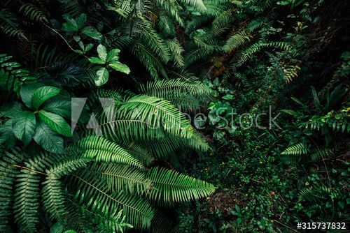 Stock Image: tropic leaf background jungle leaves