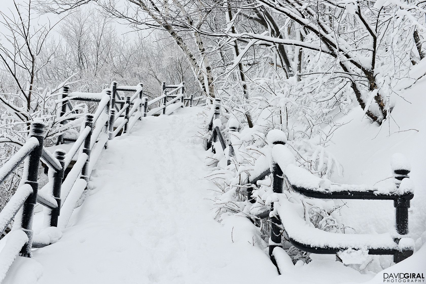 Snow covered stairs of Mont Royal Park in Montreal   Winter ...