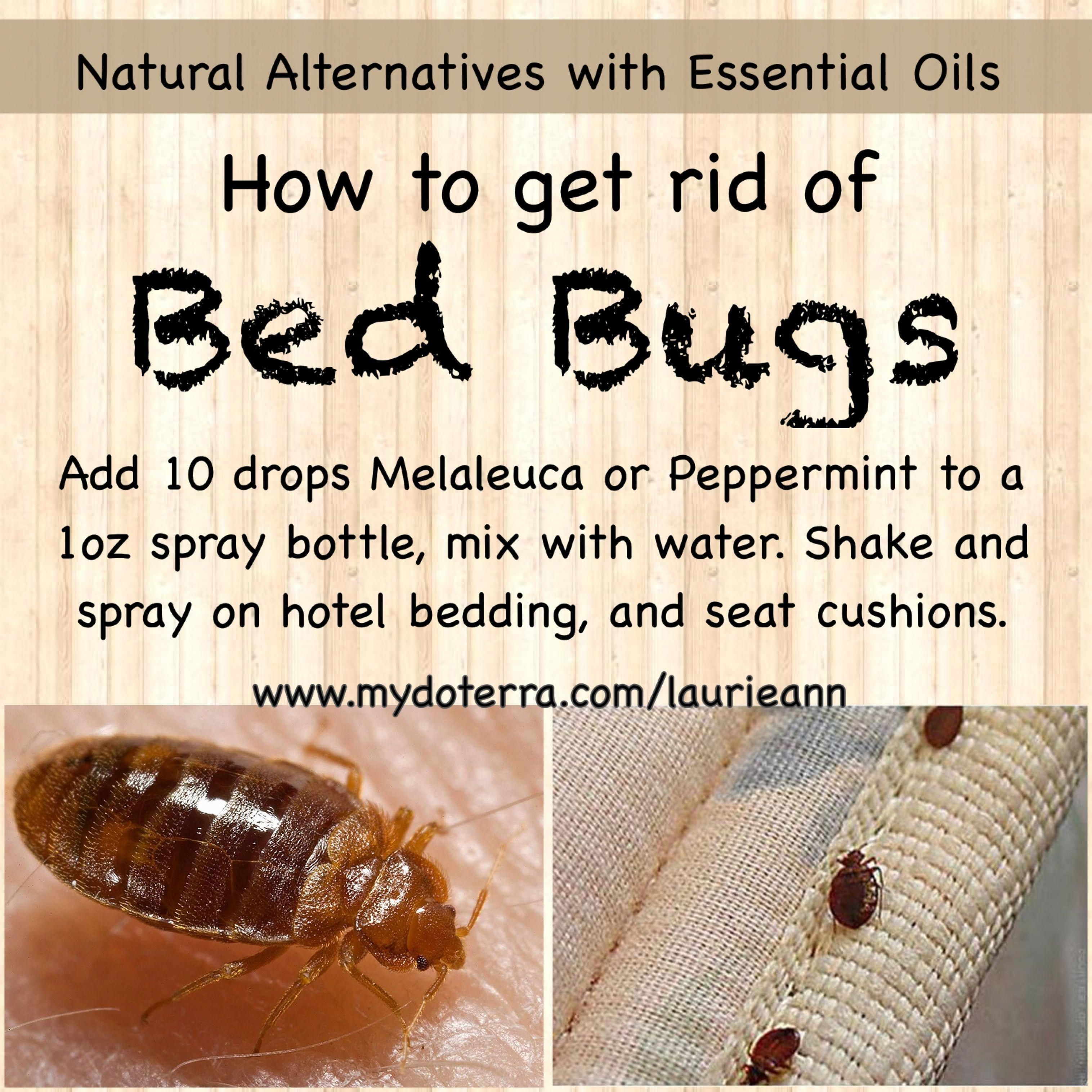 Carpet Runner Next Day Delivery Id 7341160134 Bed Bugs Essential Oils Diy Essential Oils Bed Bugs