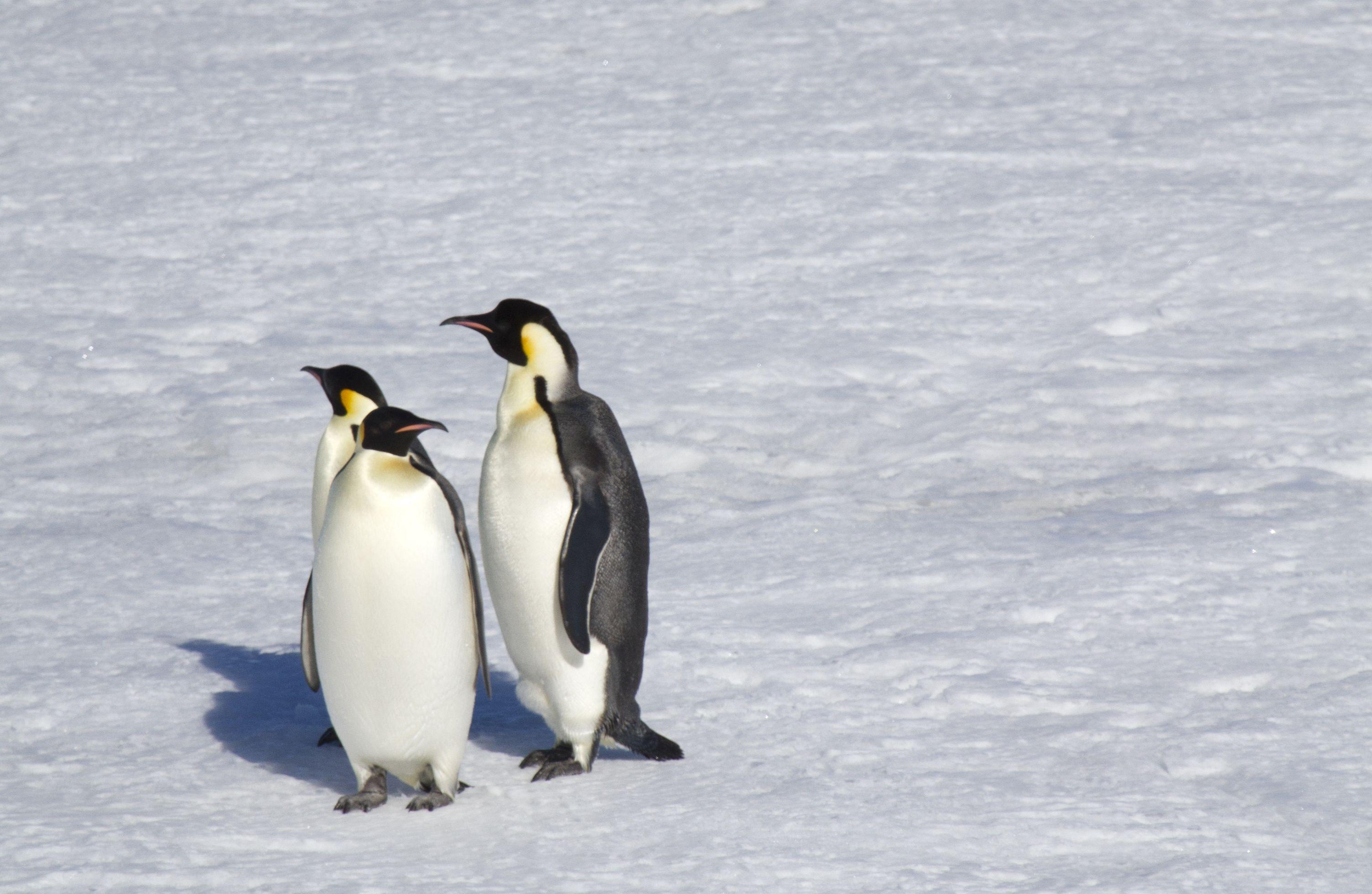 17++ Animals that live in antarctica ideas