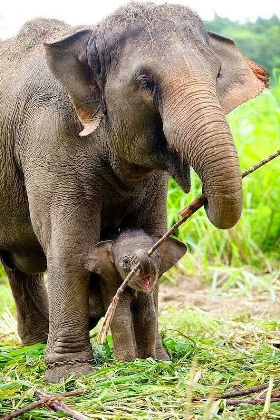 Double Love Elephant Animals Cute Animals