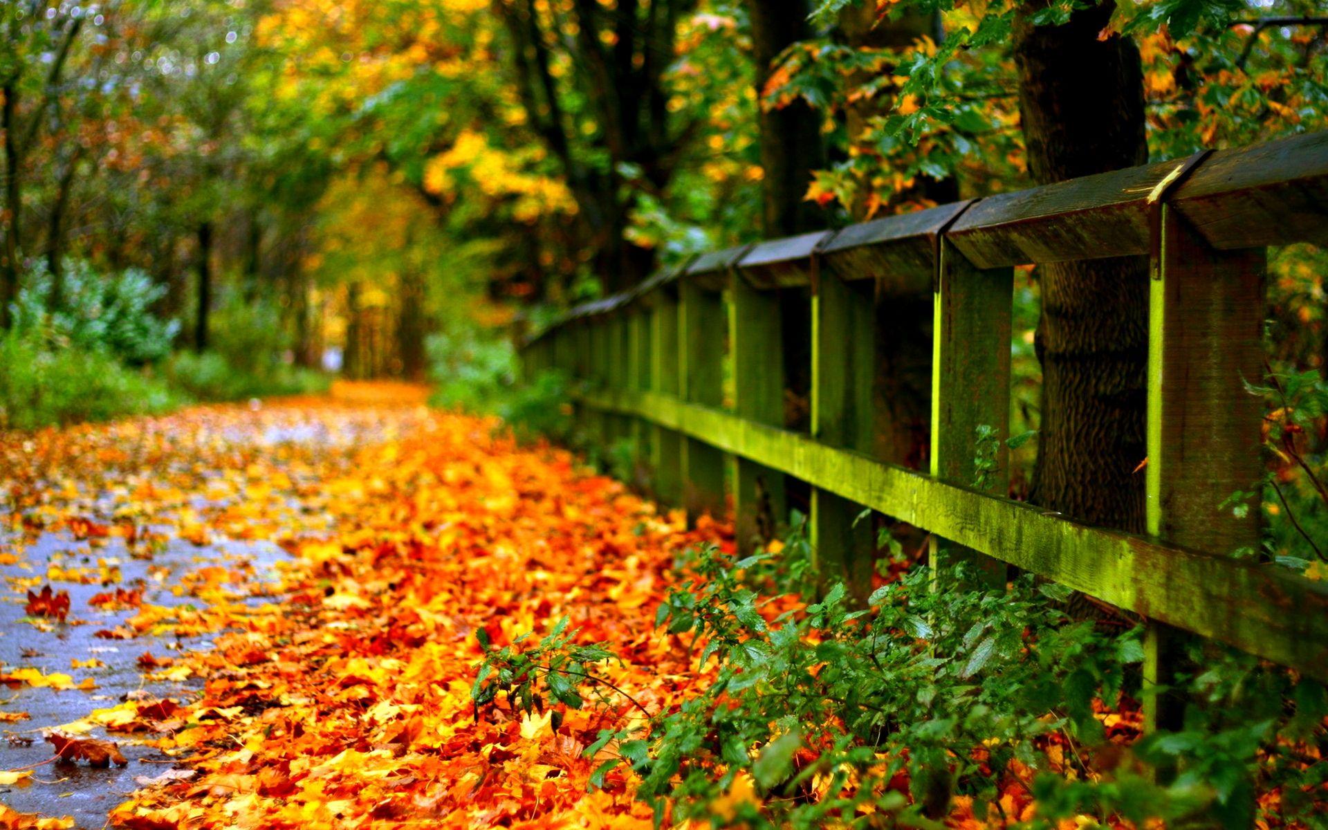 Autumn Meditation   Wise Blood   Fall *&* Halloween   Pinterest ...