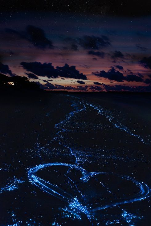 Sea of Stars on Vaadhoo Island in the Maldives would be a breathtaking honeymoon location!