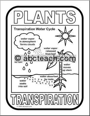 Lab 3 worksheet plant transpiration