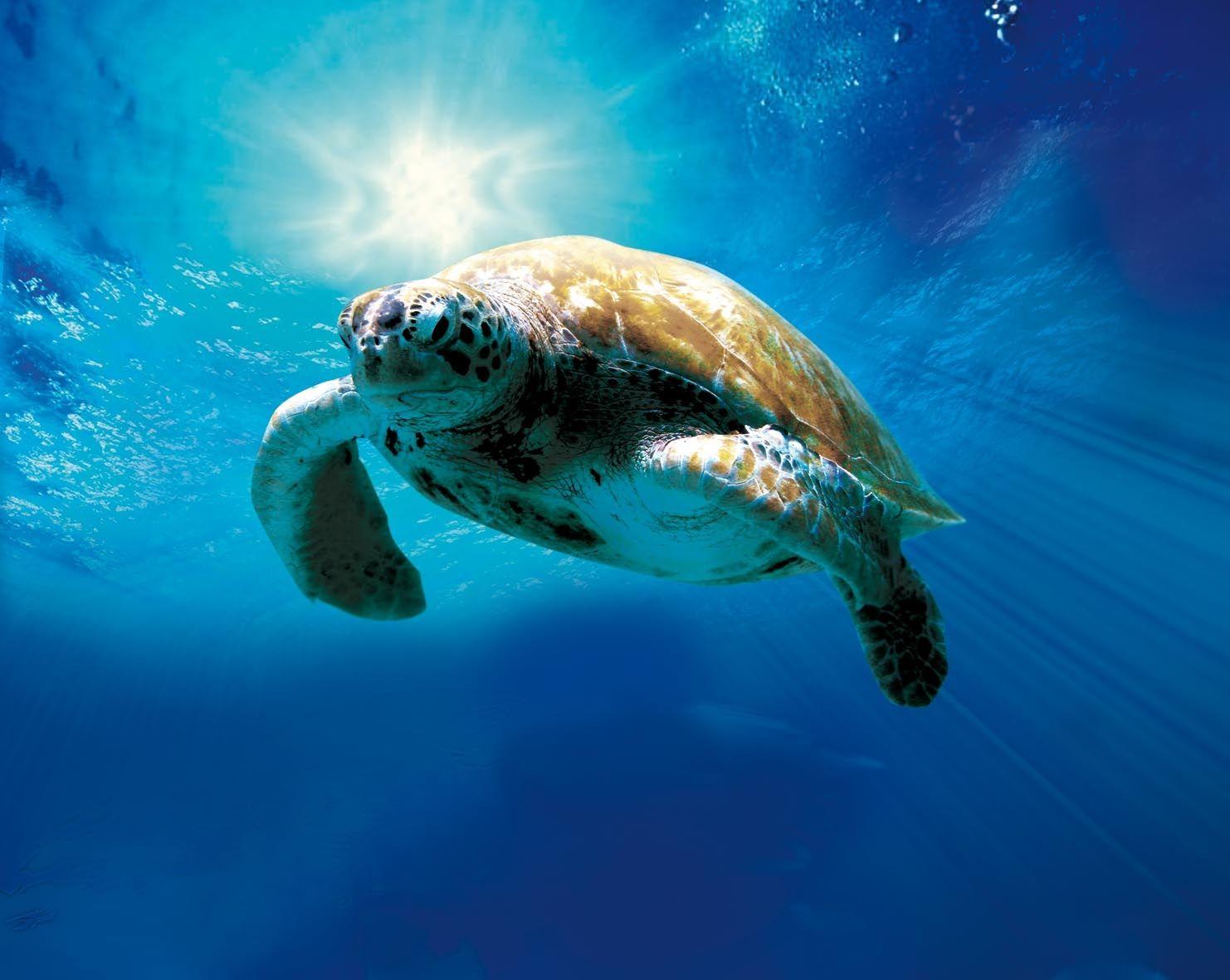 Animal... Sea Turtle