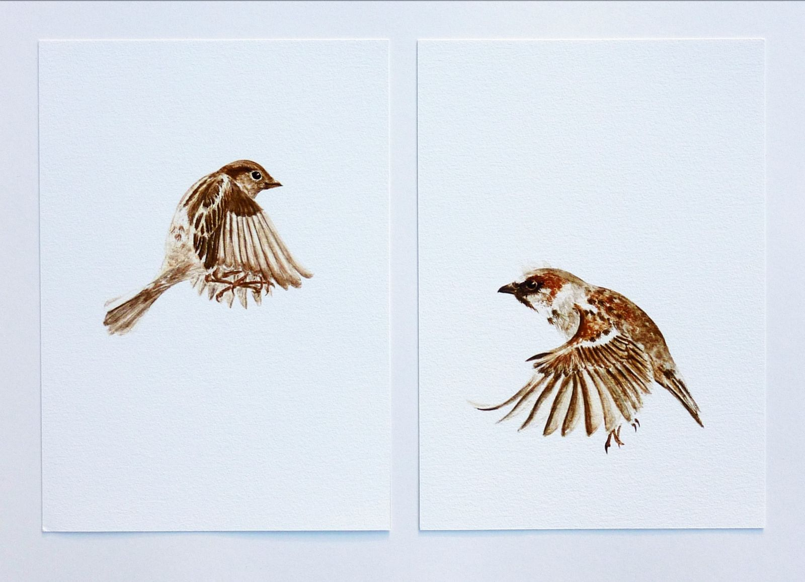 Flying Sparrow Drawing | Flying Girl Sparrow - a giclee ...