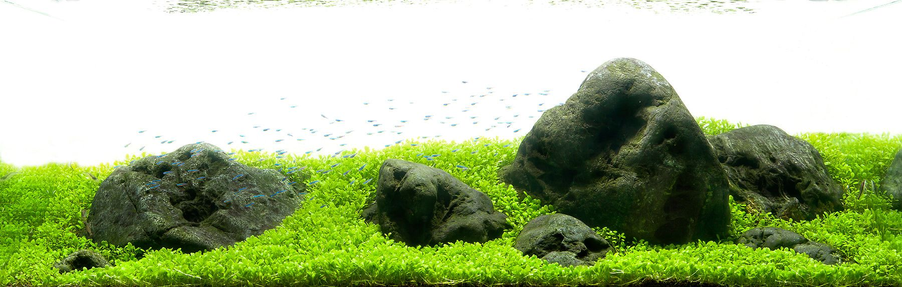 Fish tank japan - Aquarium Design Group An Aquascape Using Hakkai Stones