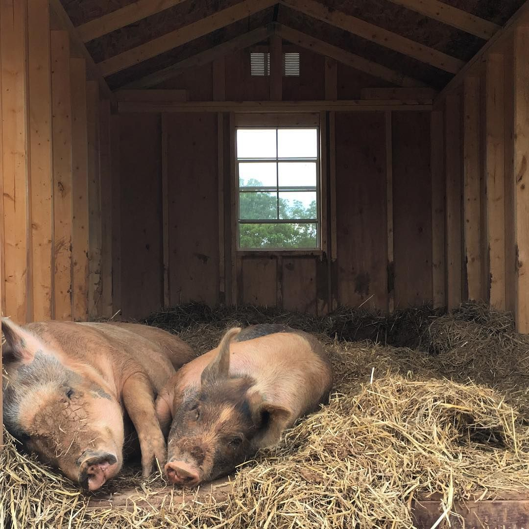 "The Gentle Barn Tennessee on Instagram: ""Ever have those ..."