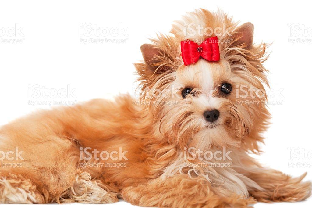 Bildergebnis Fur Hund Mit Schleife Hunde Bilder