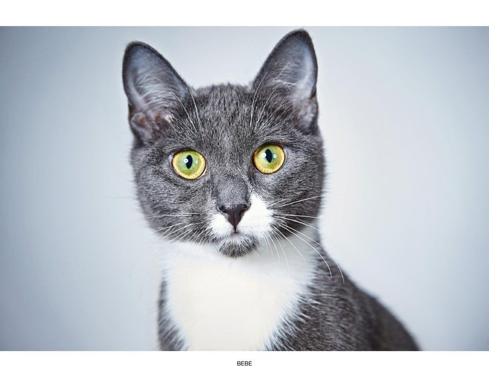 Portraits Of Animals Up For Adoption At Humane Society Of