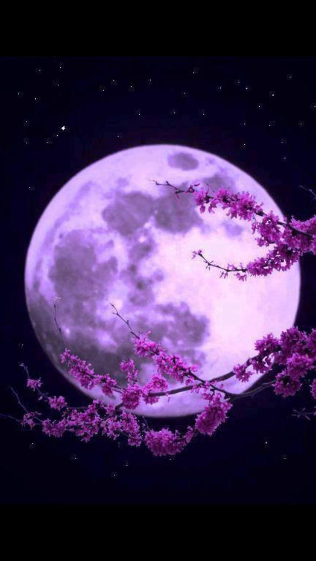 Essa lua dedico para voc hoje o dia seu mas noite - Purple moon wallpaper ...