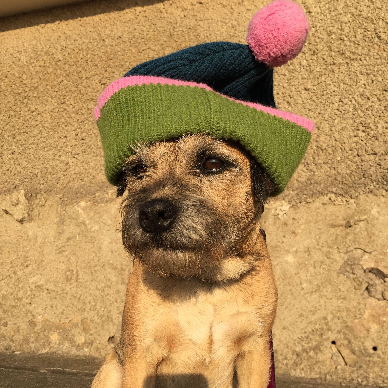 Jack In A Hat Border Terrier Jack Spratticus Border Terrier