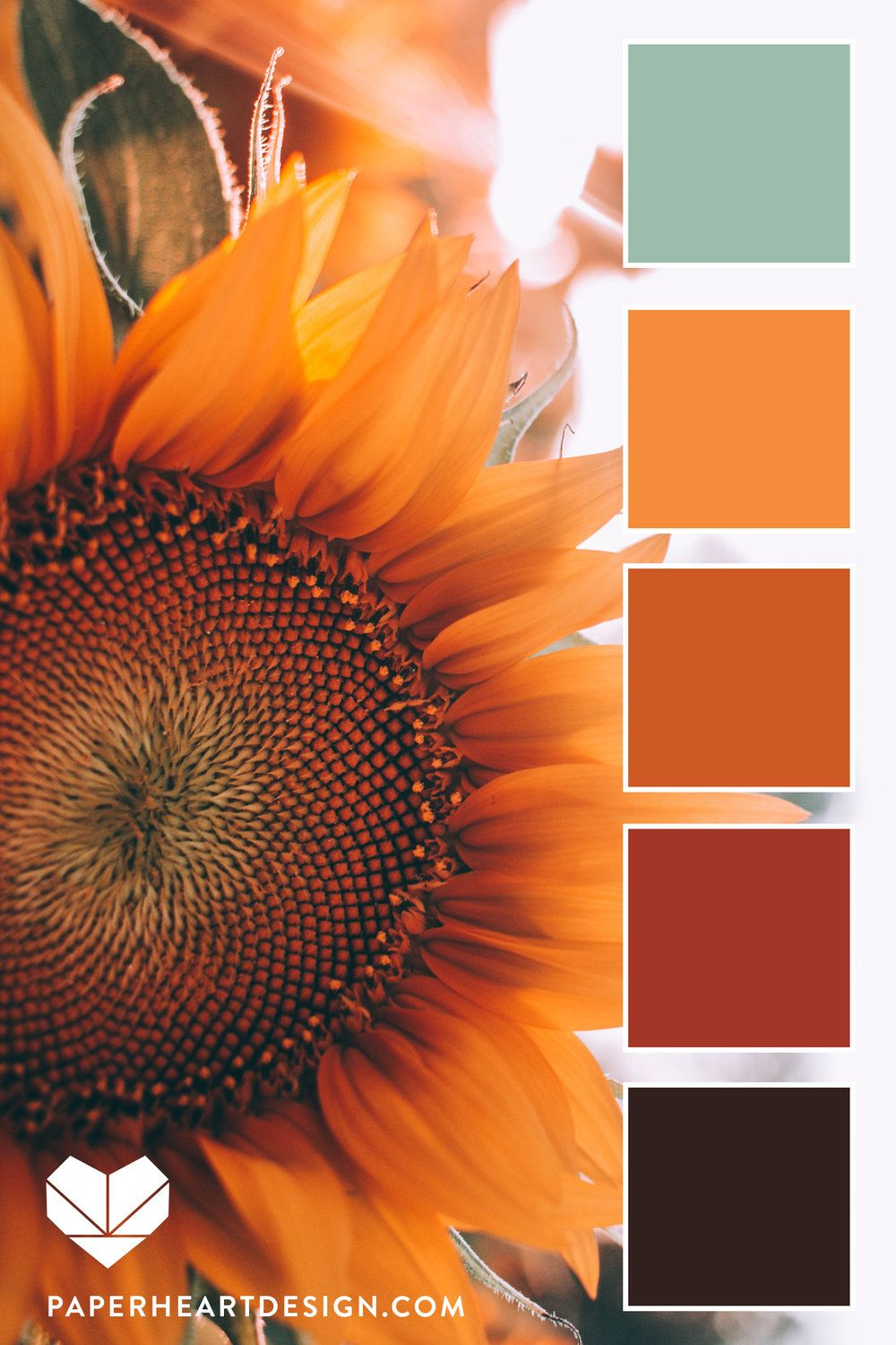 Color Palette: Fall Sunflower #fallcolors