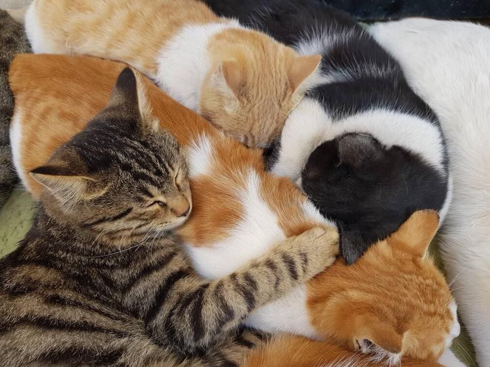 Time To Sleep Good Night Houseofcats Syria Cat Furry Cats And Kittens Kittens