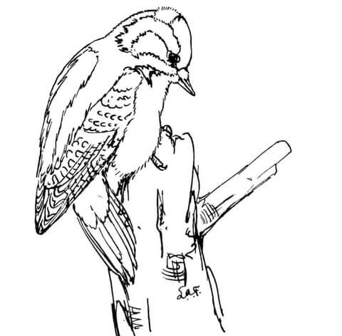 Downy Woodpecker Coloring Page From Woodpeckers Category Select