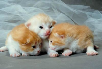 A jigsaw puzzle you can play online Newborn Kittens