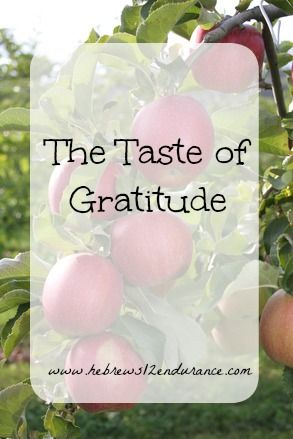 Does gratitude have a taste? What does it taste like?