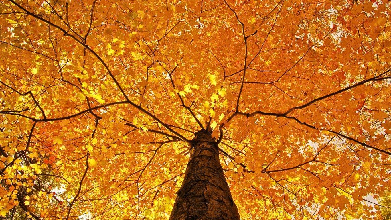 Обои осень, красиво. Природа foto 18