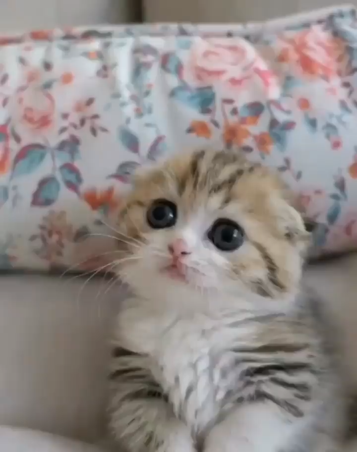 Funny And Cute Kittens