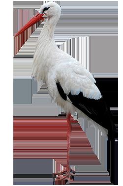 Kapcsolódó kép | Beauty animals, Bird art, Stork