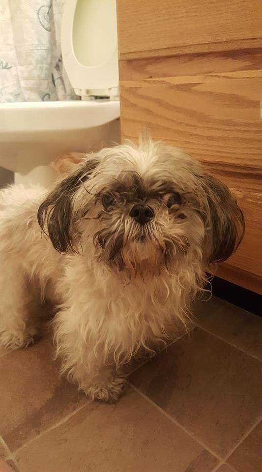 Alright People This Is The Second Dog I Have Found Lost In The Willow Cove Apartment Complex 9300 South Redwood Road West Jor Shih Tzu West Jordan Black White