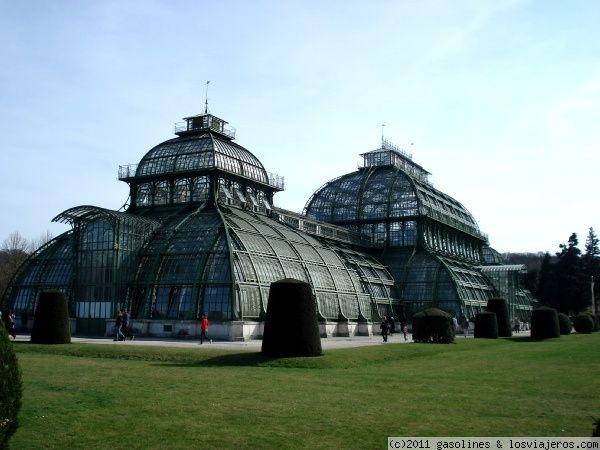 la casa de las palmeras del palacio de schonbrunn de viena preciosos edificios de cristal donde