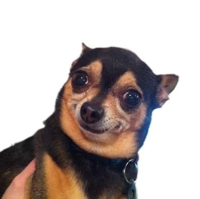 Dog Making An Odd Face Funny Pictures Funny Funny Memes