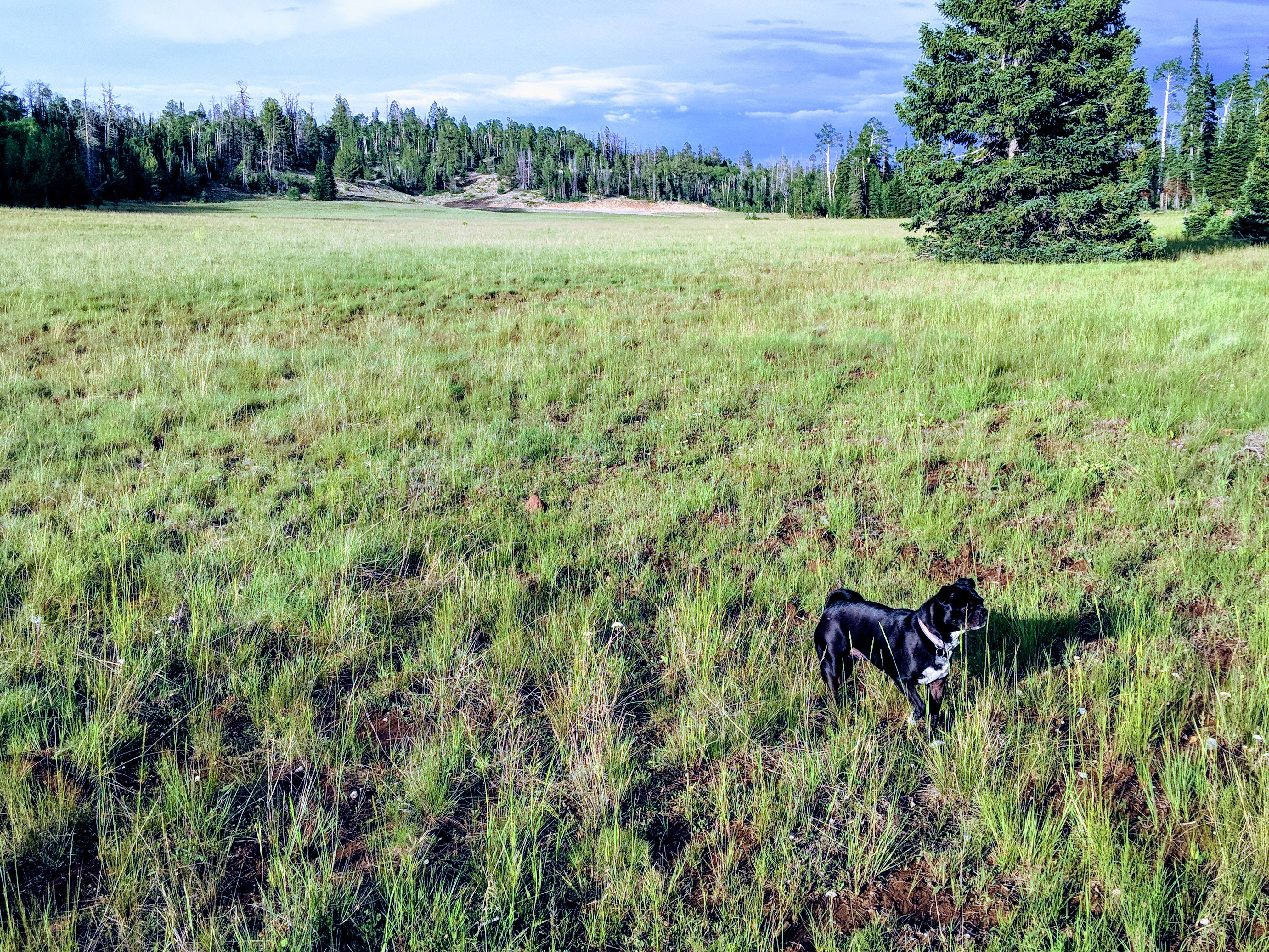 Exploring Dixie National Forest City Pets Cedar City Canyon Park