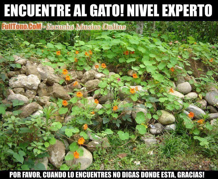 Encuentra Al Gato Quot Nivel Experto Quot Brain Teasers Pictures Gatos Aches